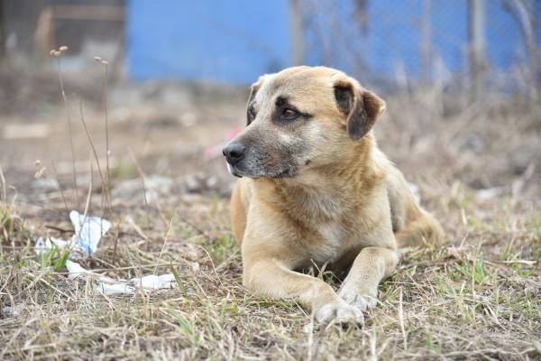 Управление по борьбе с бездомными животными: До конца года проблема бездомных собак в Баку будет решена